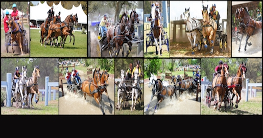 CARRIAGE DRIVING & EQUESTRIAN SPORTS