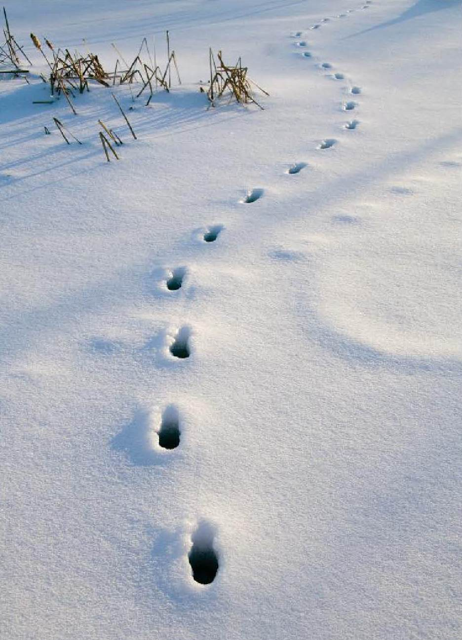 Annotation Tracks in the Snow