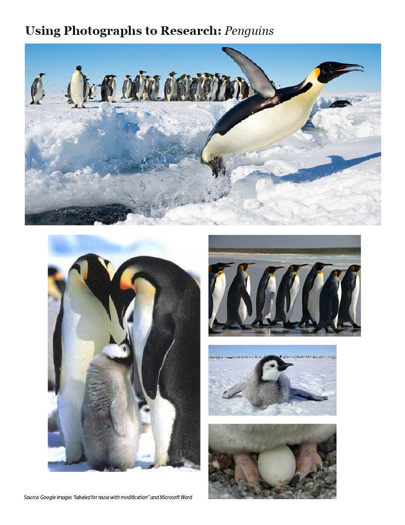 Using Photos to Research: Photo Array -- Penguins
